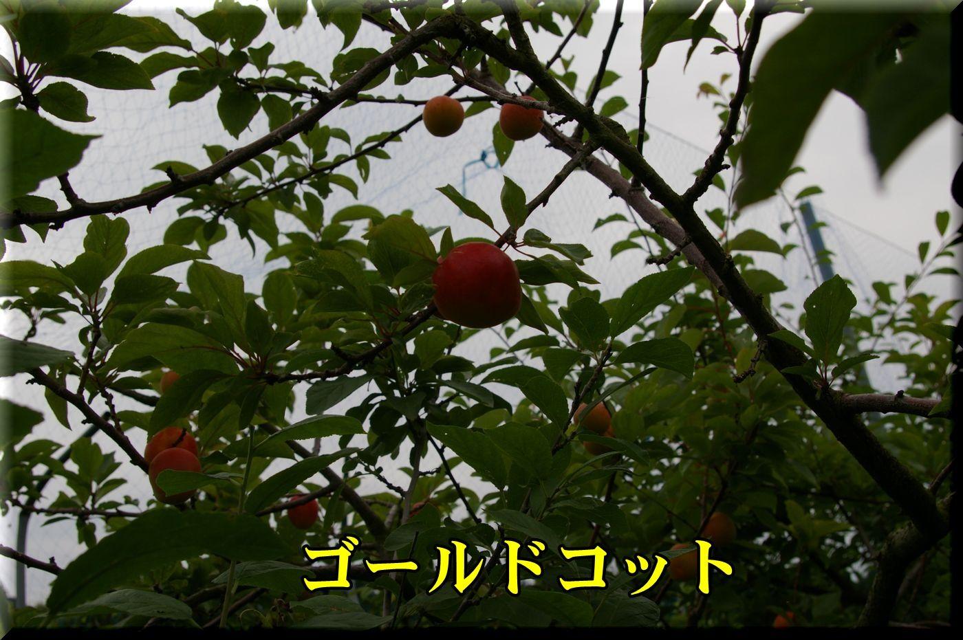 1Gcot160606_007.jpg