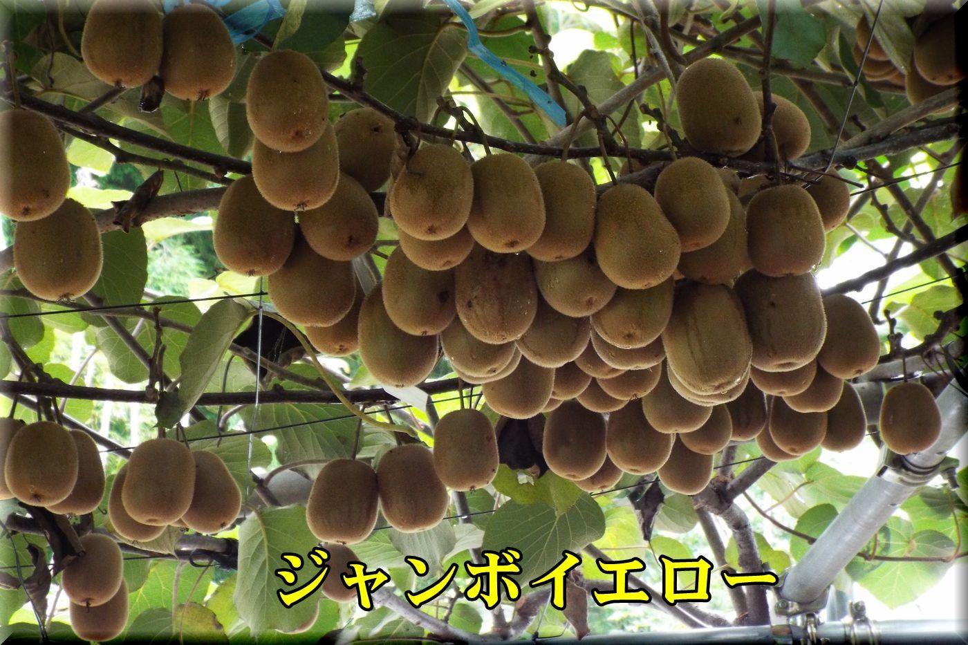 1JY160915_011.jpg