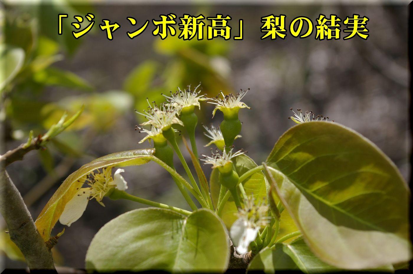 1Jnitaka160418_001.jpg