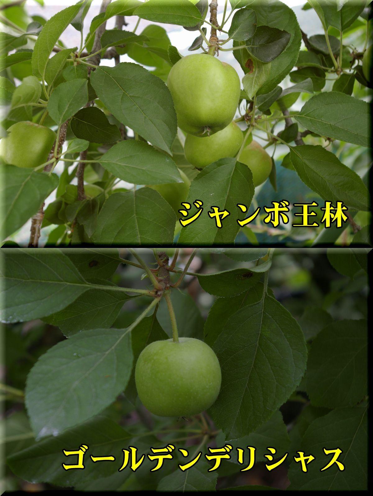 1Jori_Gde160609_012.jpg