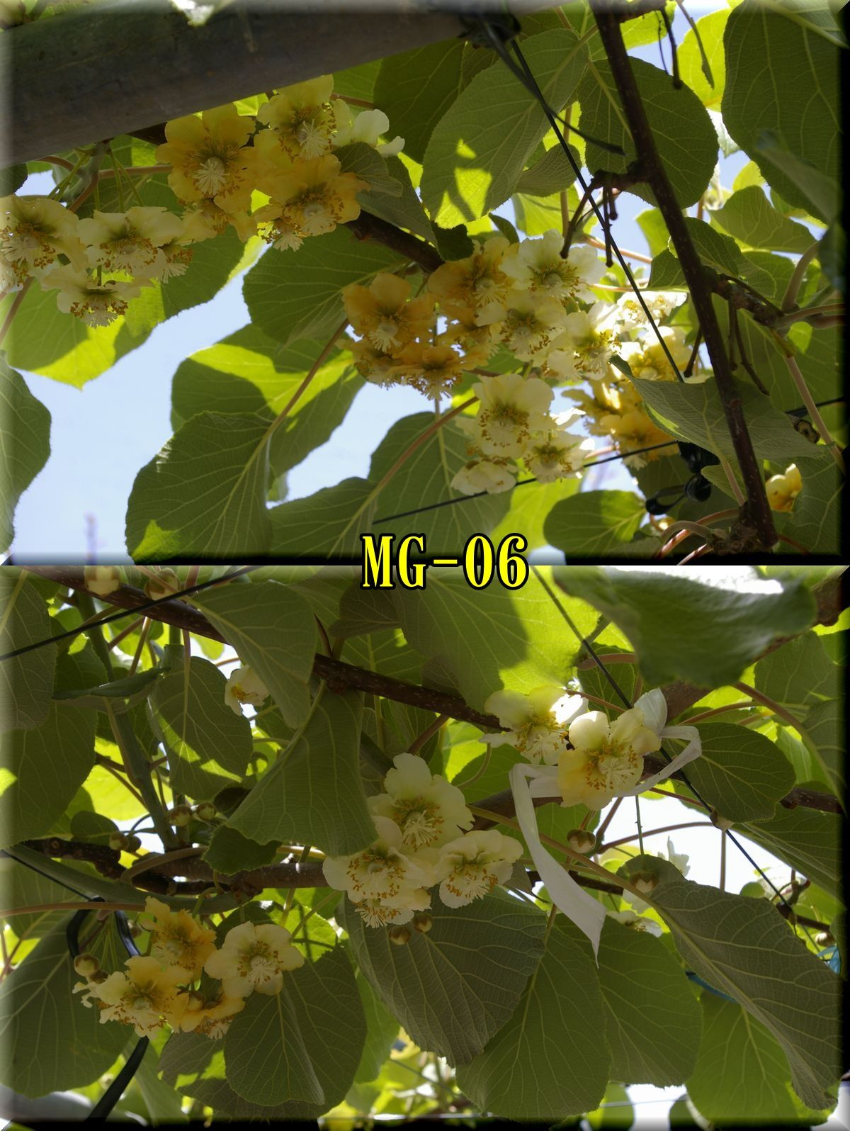 1MG160508_014.jpg