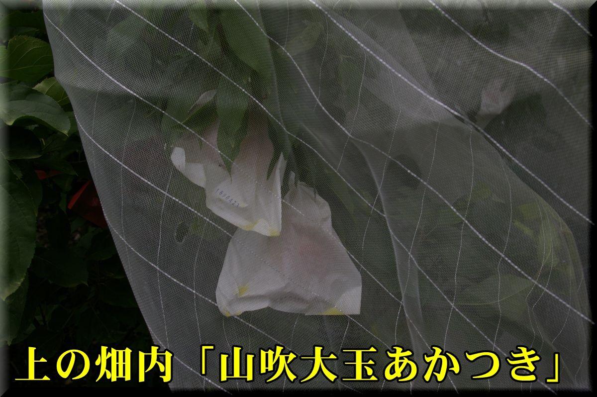 1YOakatuki160723_006.jpg