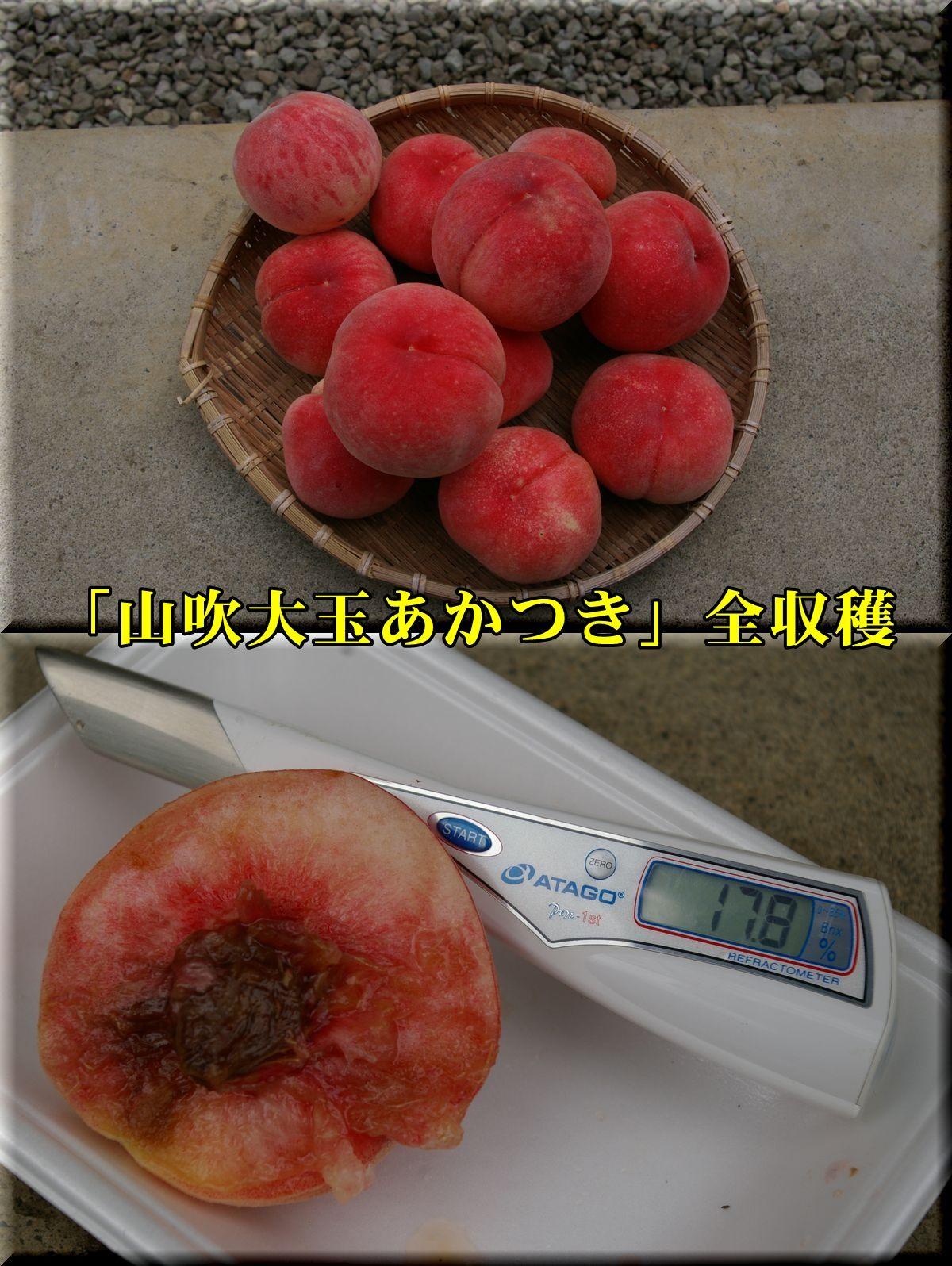 1YOakatuki160723_010.jpg