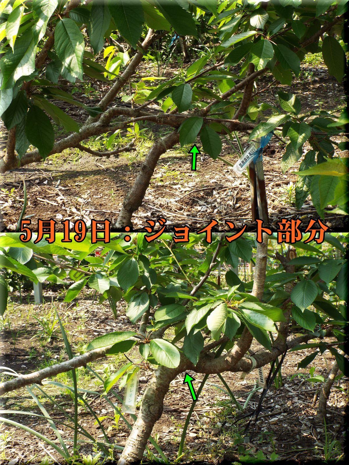 1_H2_joint160519_022.jpg