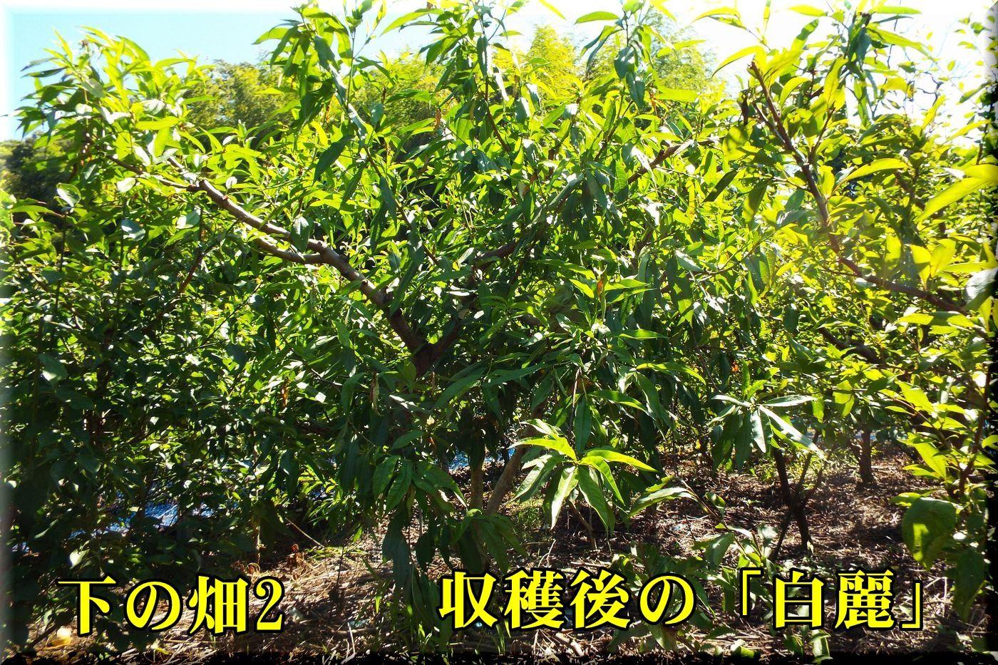 1hakurei160808_007.jpg