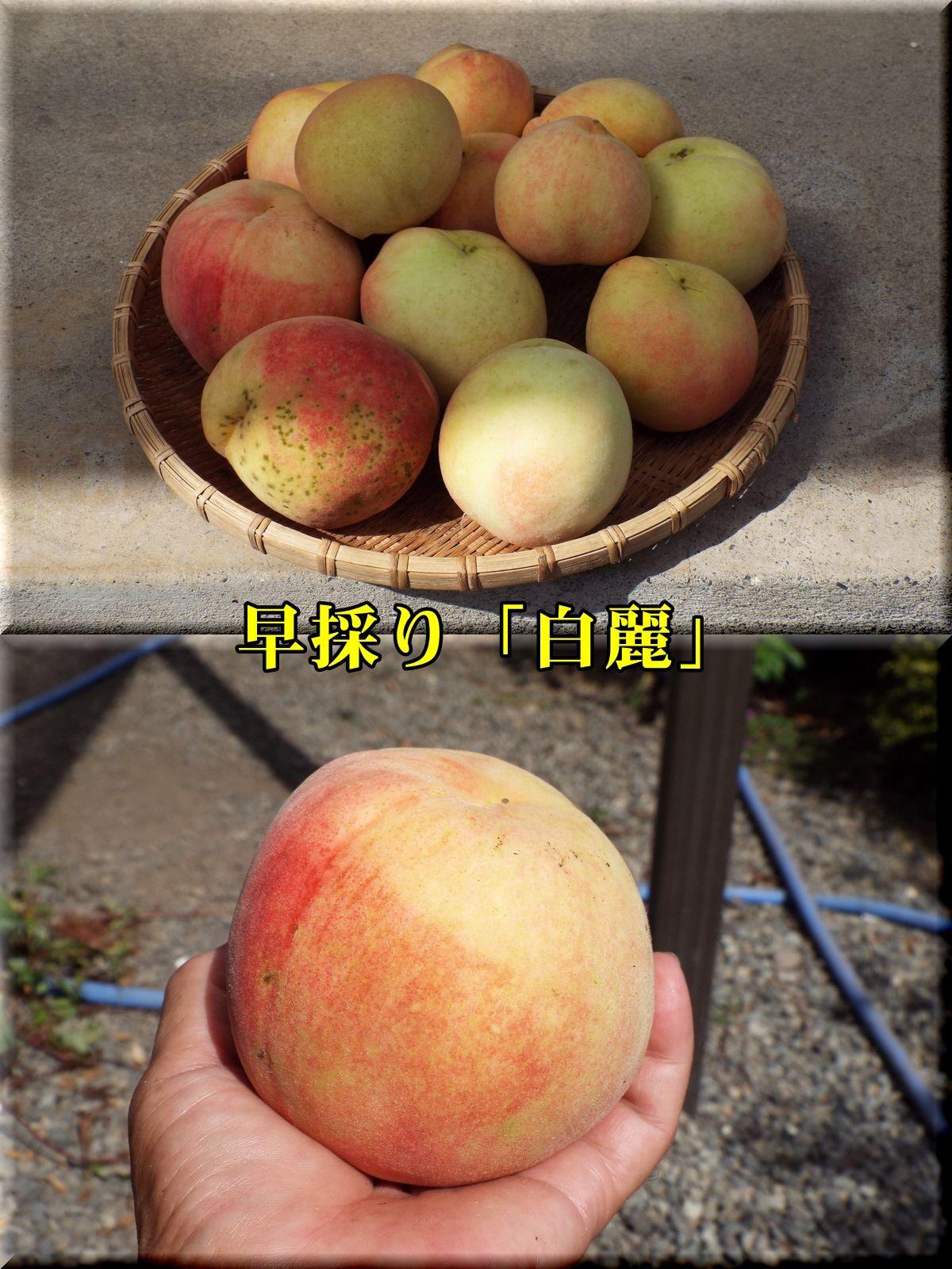 1hakurei160808_019.jpg