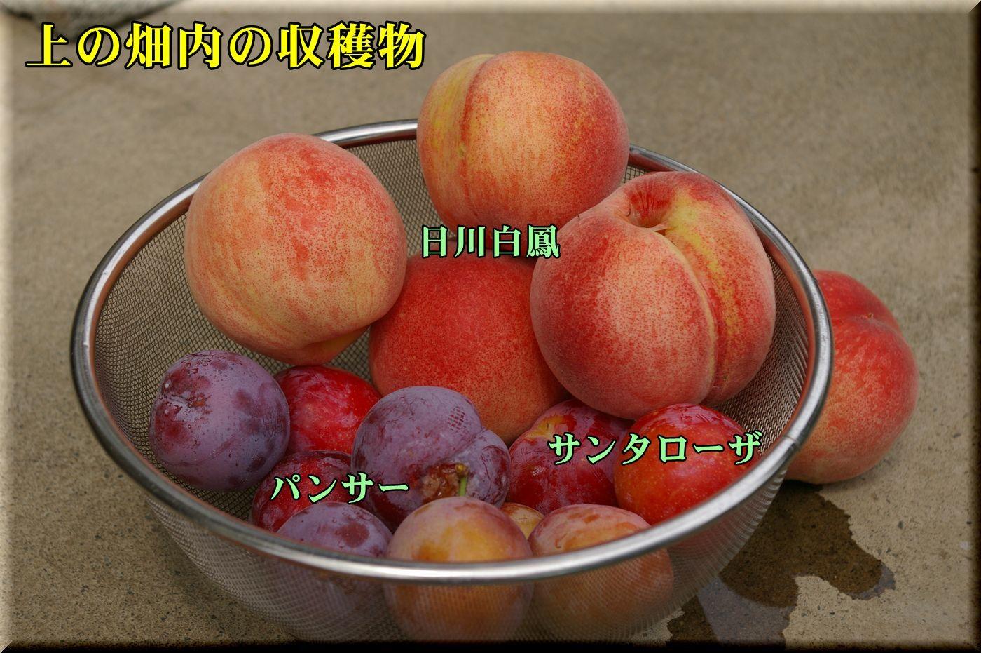 1hikawa_panser160710_030.jpg