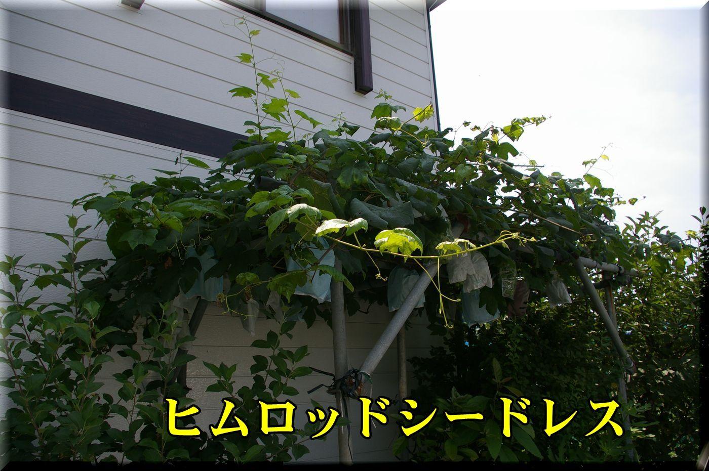 1himurodo160720_001.jpg