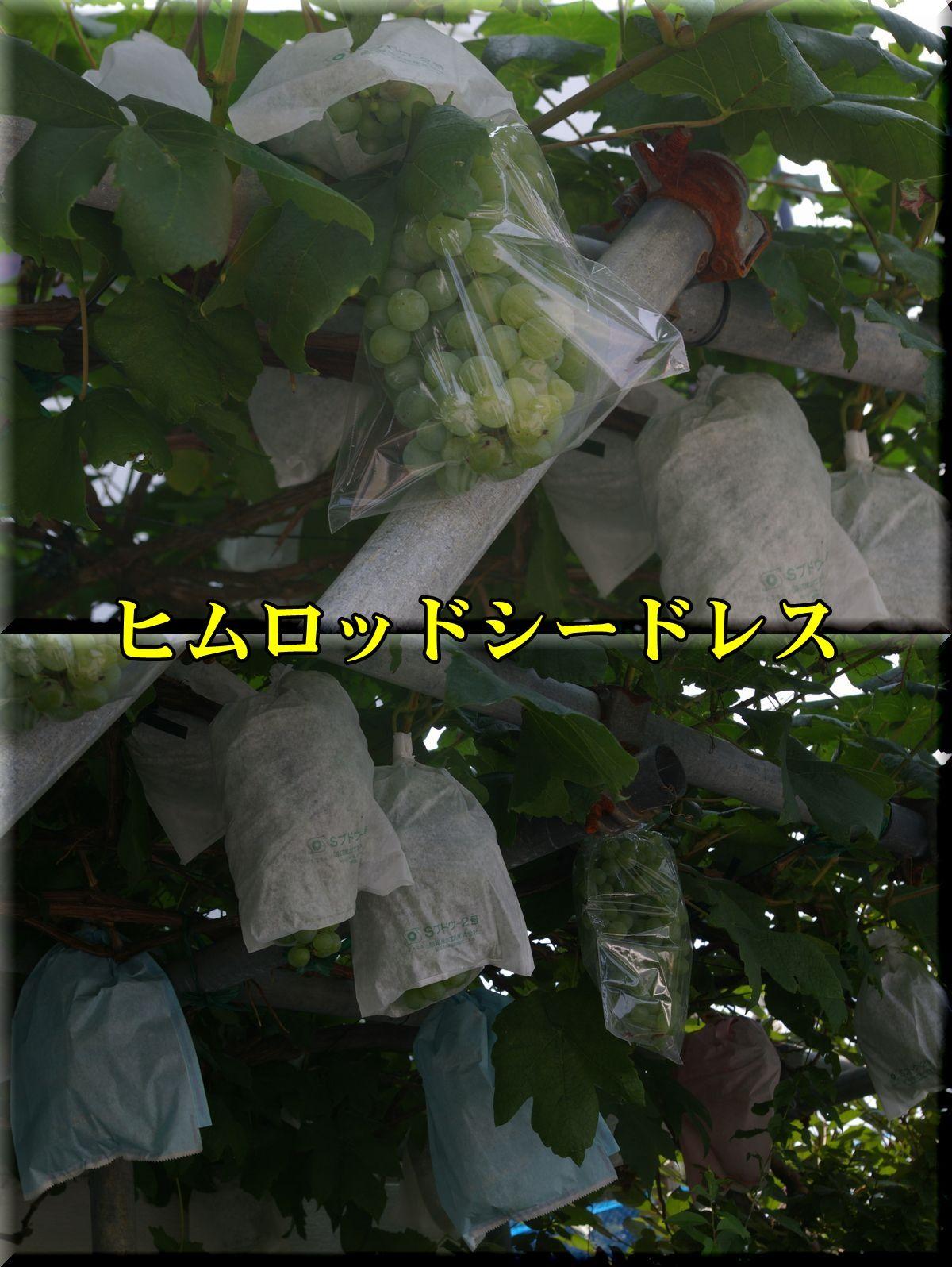 1himurodo160720_002.jpg