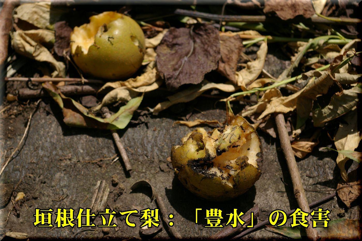 1housui160723.jpg