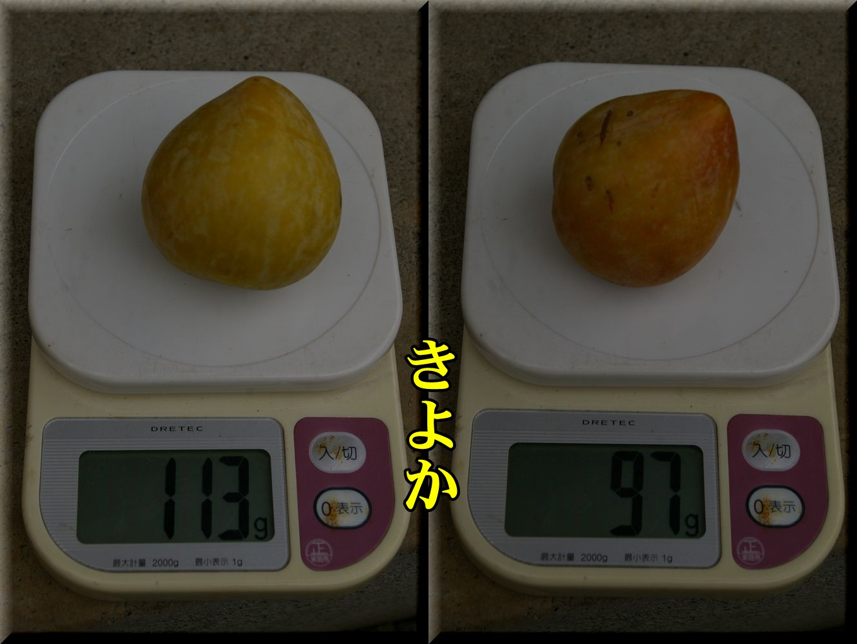 1kiyoka160726.jpg