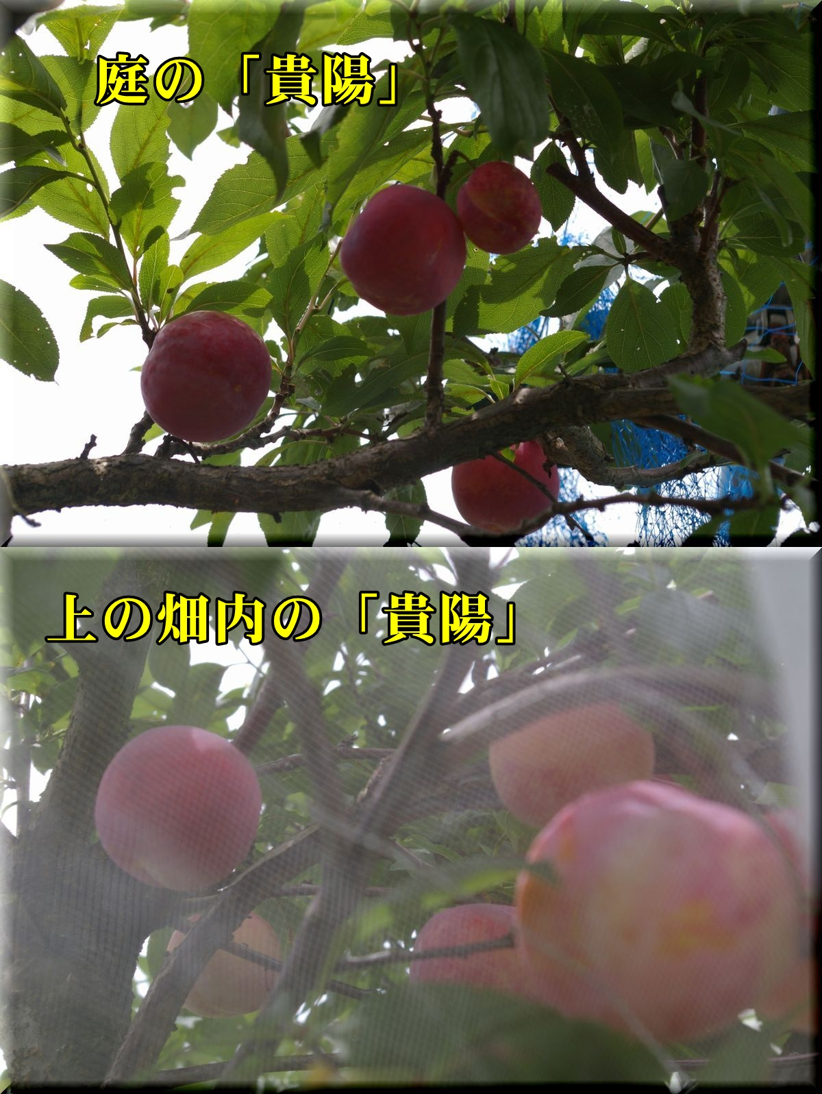 1kiyou2hon160710.jpg