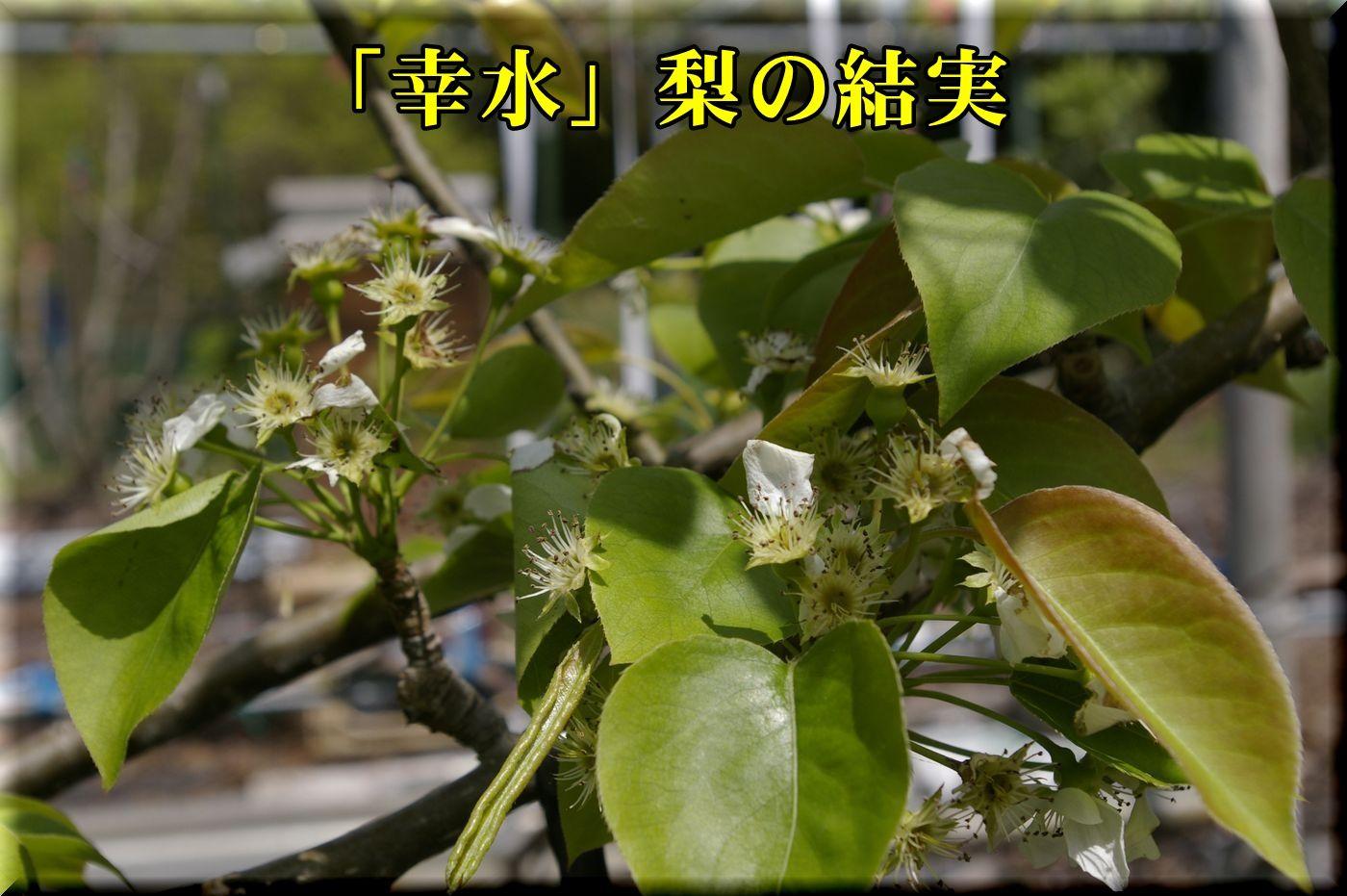 1kousui160418_005.jpg
