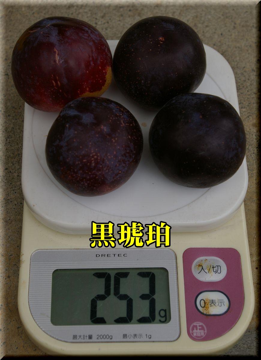 1kurokohaku160726_002.jpg