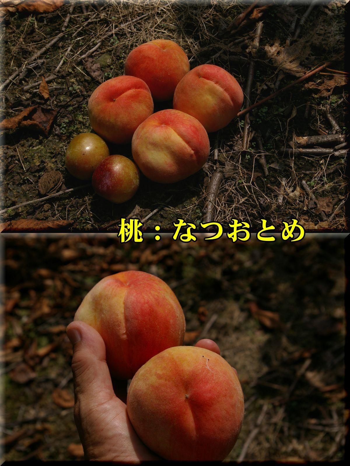 1natuo_SWkare160721_004.jpg