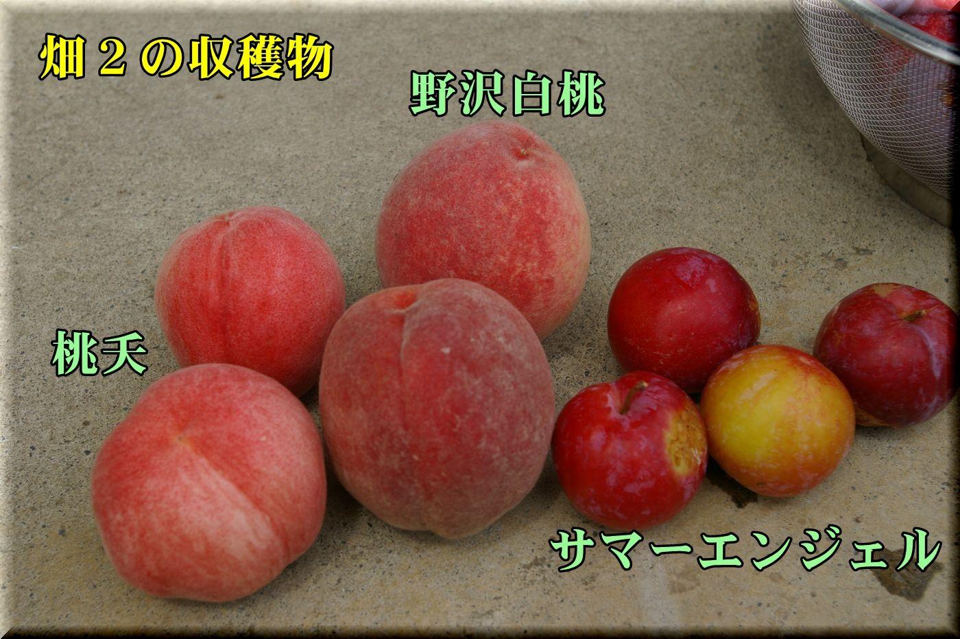 1nozawa_touyou160710_027.jpg