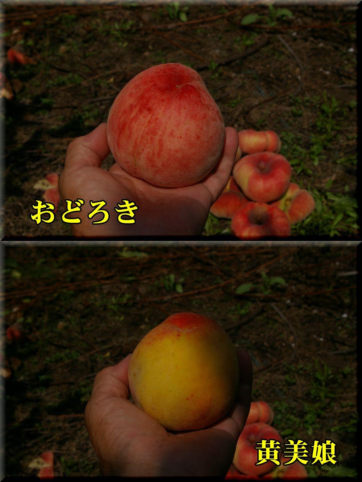 1odoro_kimi160803_011.jpg