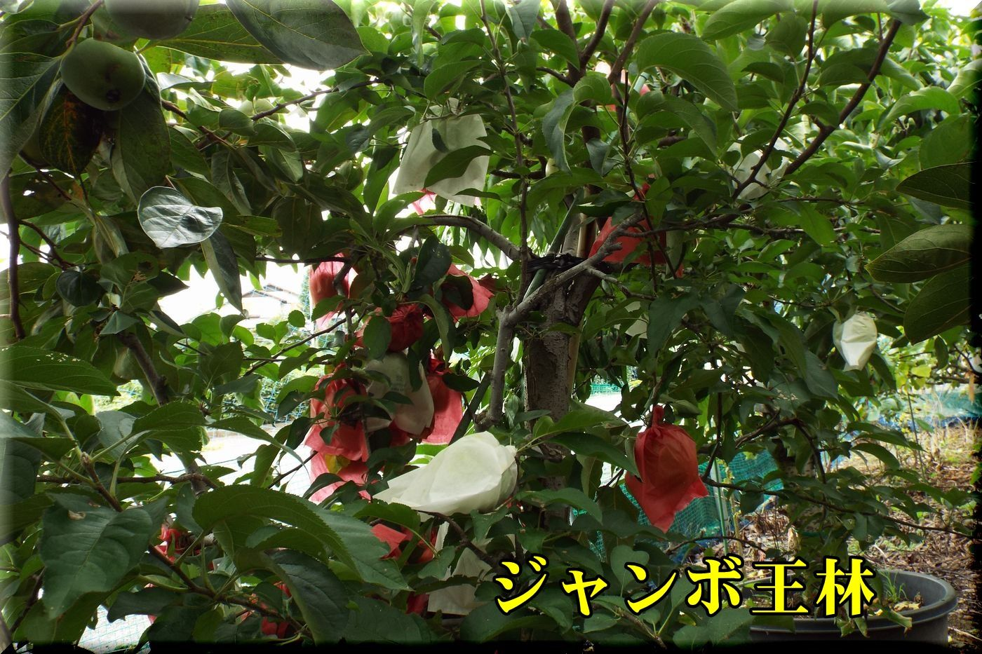 1orin160912_009.jpg