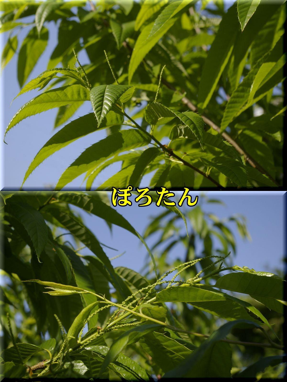 1polotan160430_022.jpg