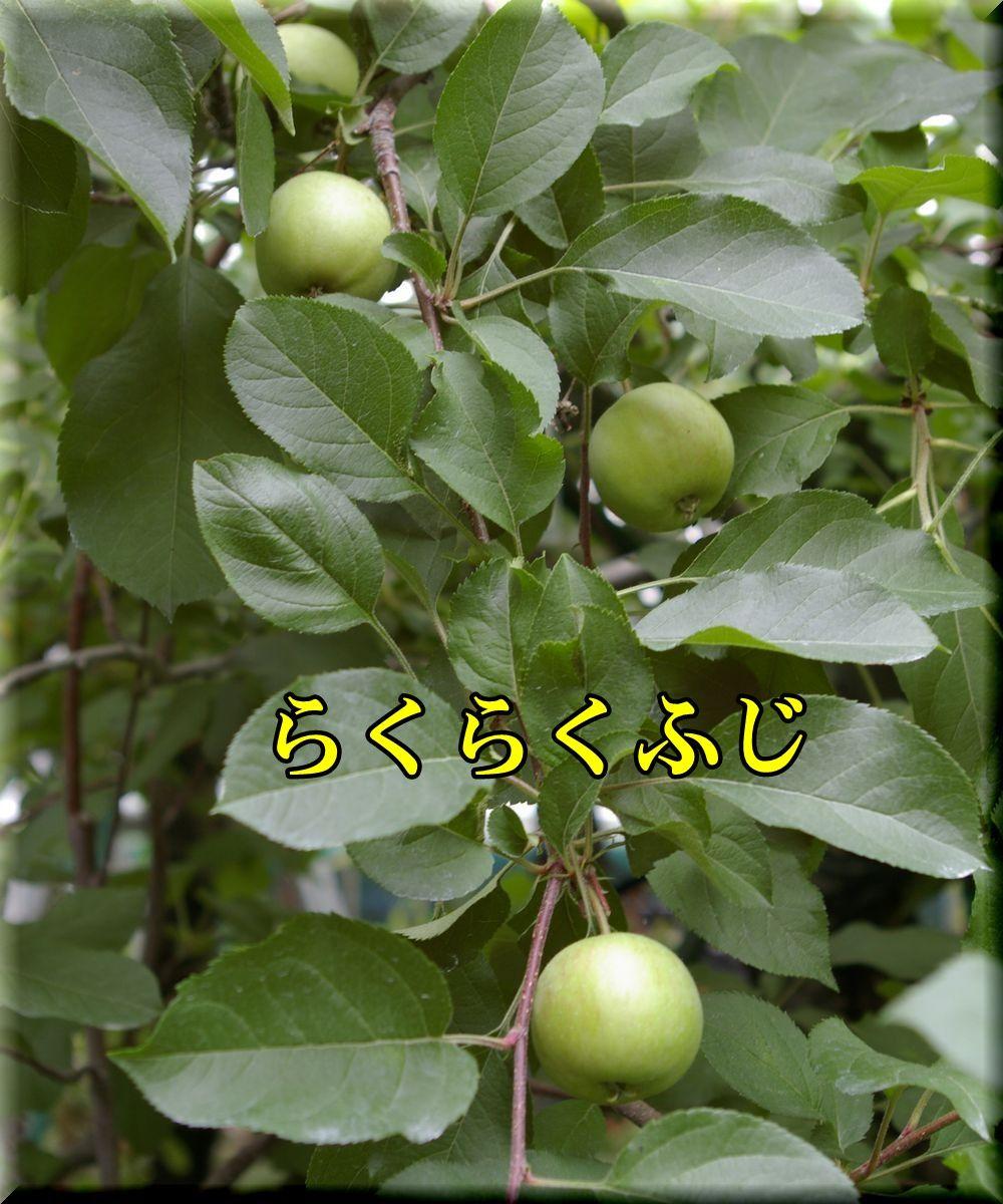 1rakufuji160609_007.jpg