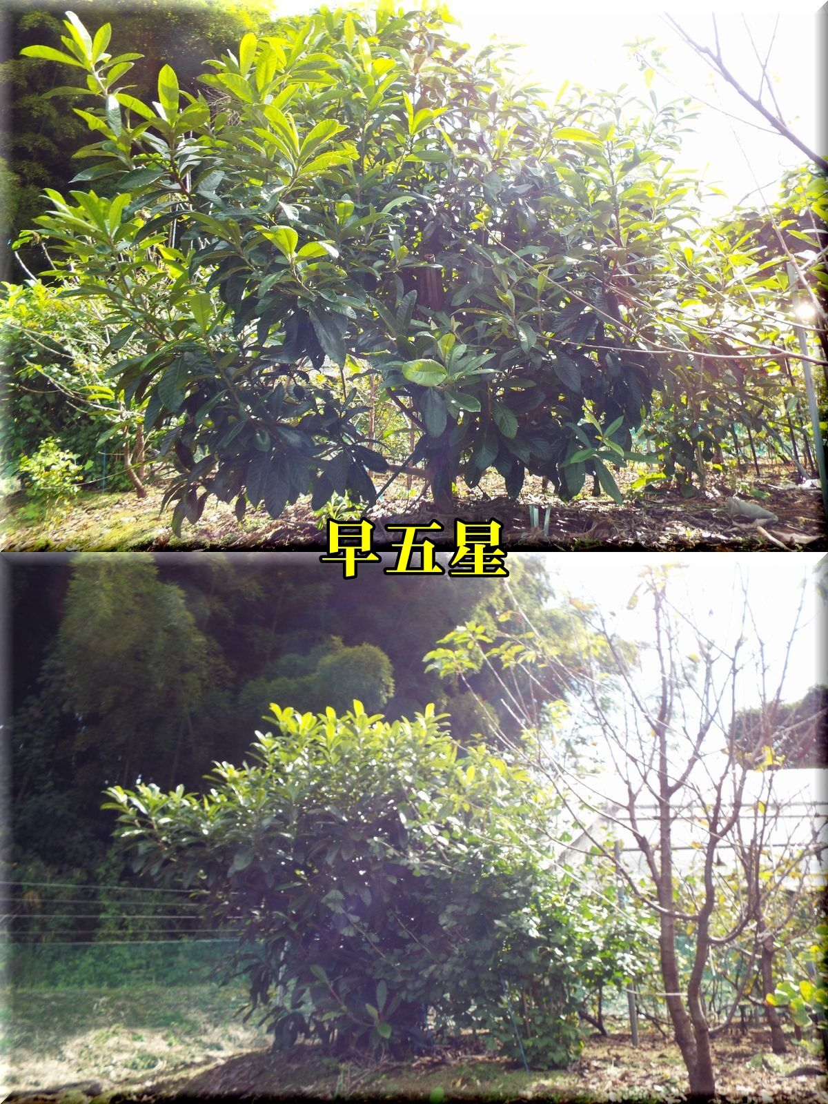 1sougosei161012_009.jpg