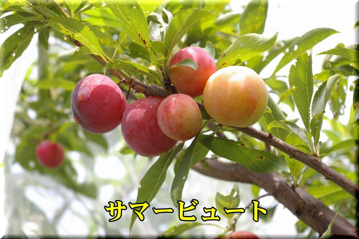 1sumerbyu160718_006.jpg