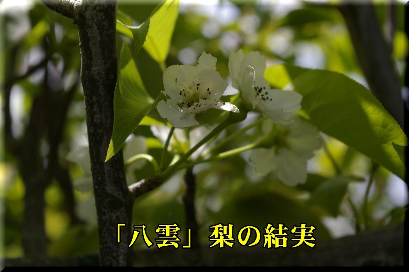 1yakumo160418_007.jpg