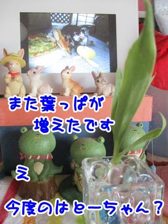 0915-11_20160915195515a26.jpg