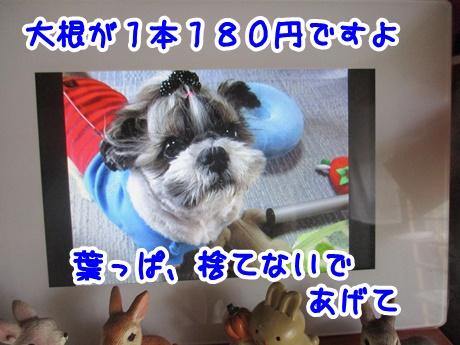1004-12_20161004143535662.jpg