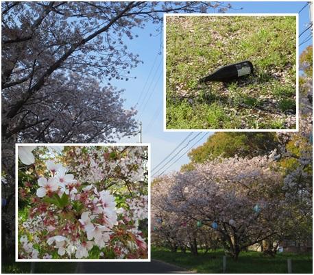 0412-桜