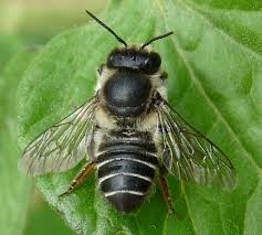 0530-ハチ
