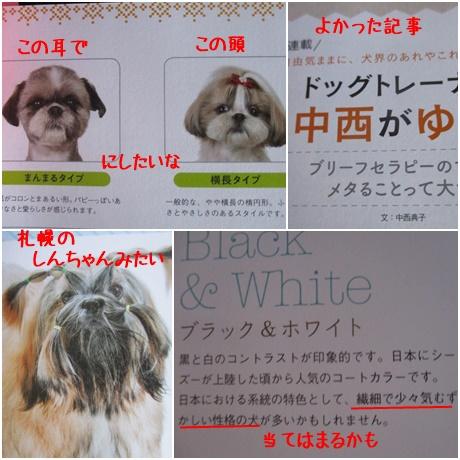 0828-愛犬の友