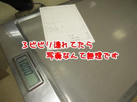 IMG_3685.jpg