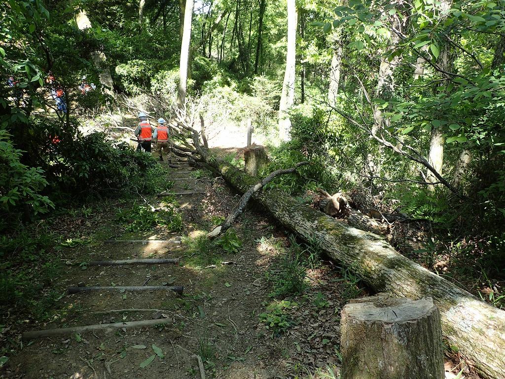枯損木の伐倒
