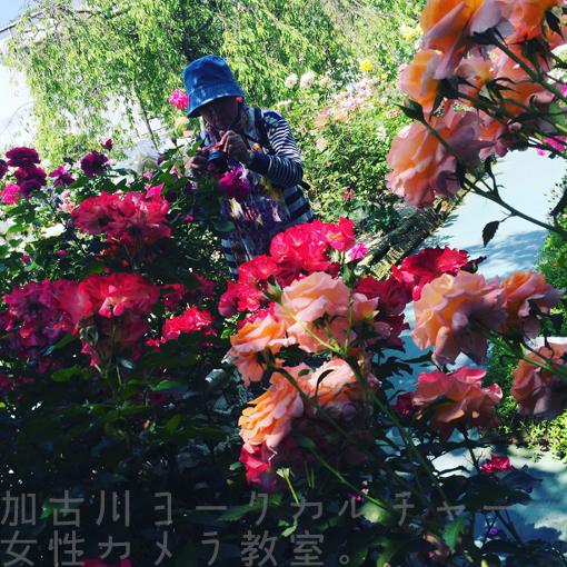 IMG_5841_20160523105549e7e.jpg
