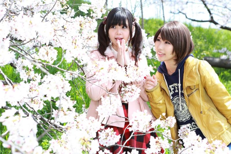 sakura_kagumio3.jpg