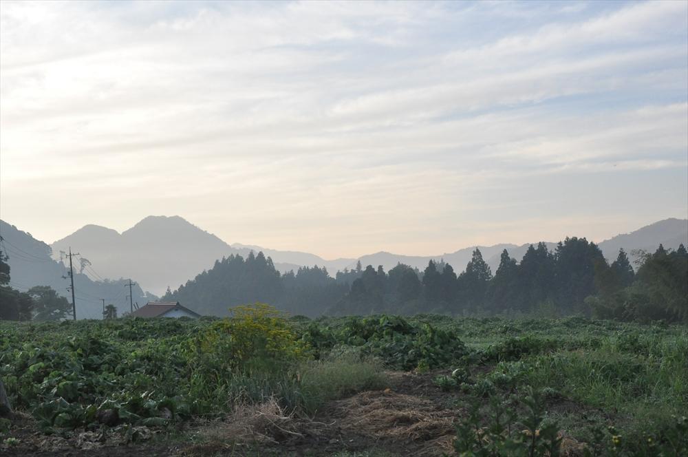 弥富の山 夏