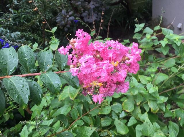 n01d5d46b84ceae060e0537db17dc401f6f9c4fc470aaa.jpg