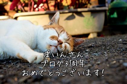 ぽいんさん、ブログ3周年おめでとうございます!
