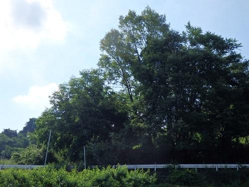 草刈・畑 006