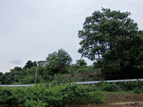 草刈・畑 007