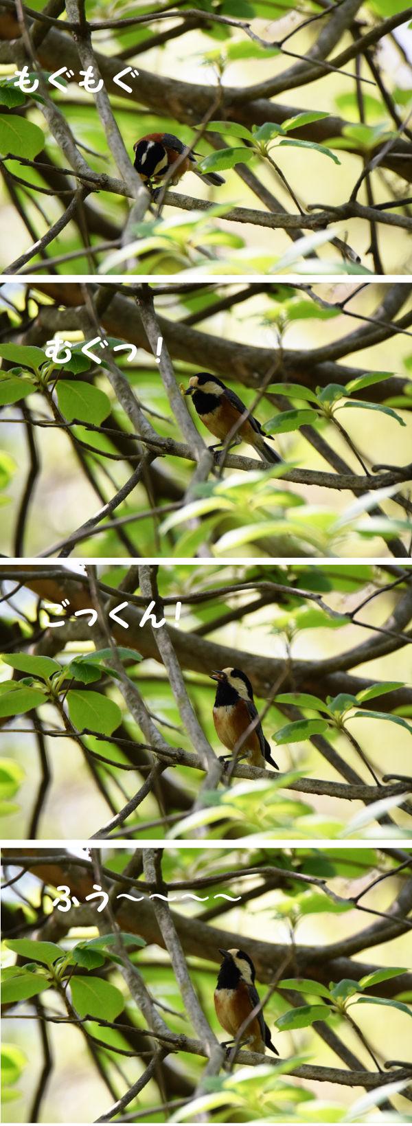 yamagara2341_20160426.jpg