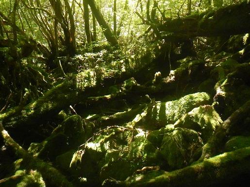 1 苔に降り注ぐ木漏れ日