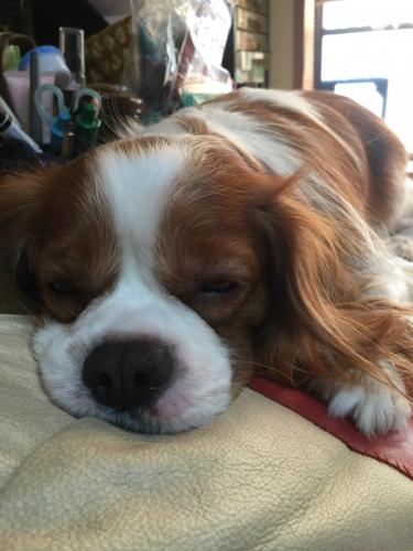 寝起きの小太郎君です。