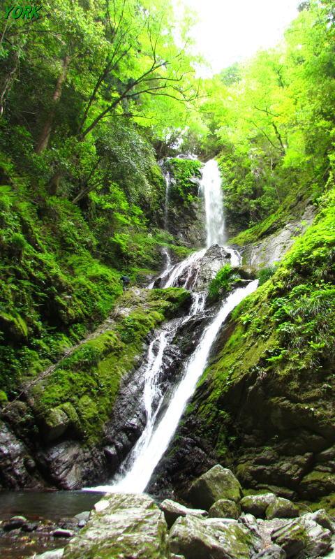 携帯用 4652雨乞の滝雌滝480×800.jpg