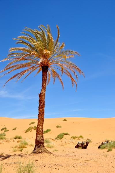 サハラ砂漠DSC_0354