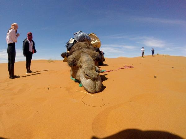 サハラ砂漠IMG_0348