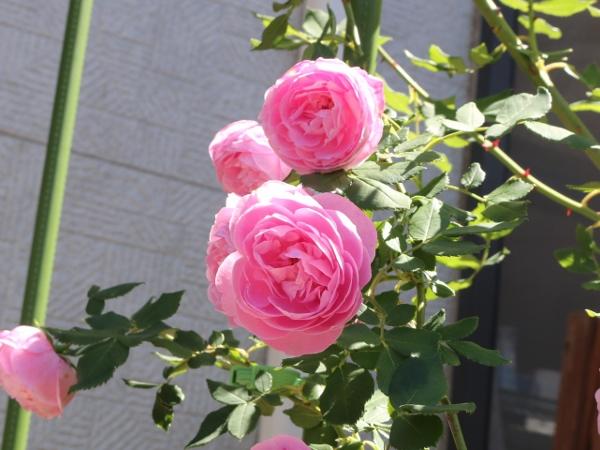 IMG_9739 (600x450)