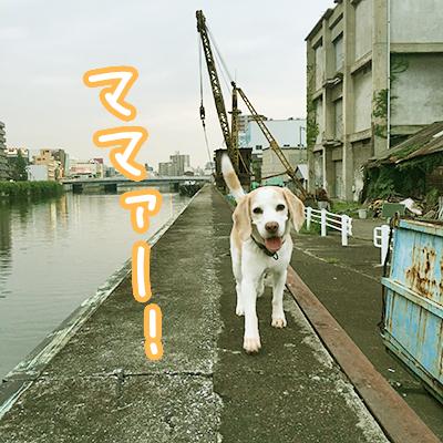 20160610レモンビーグルモク3