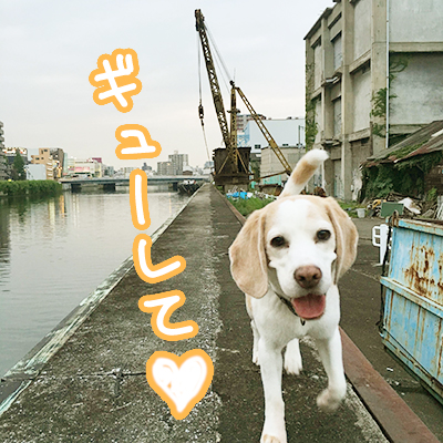 20160610レモンビーグルモク4
